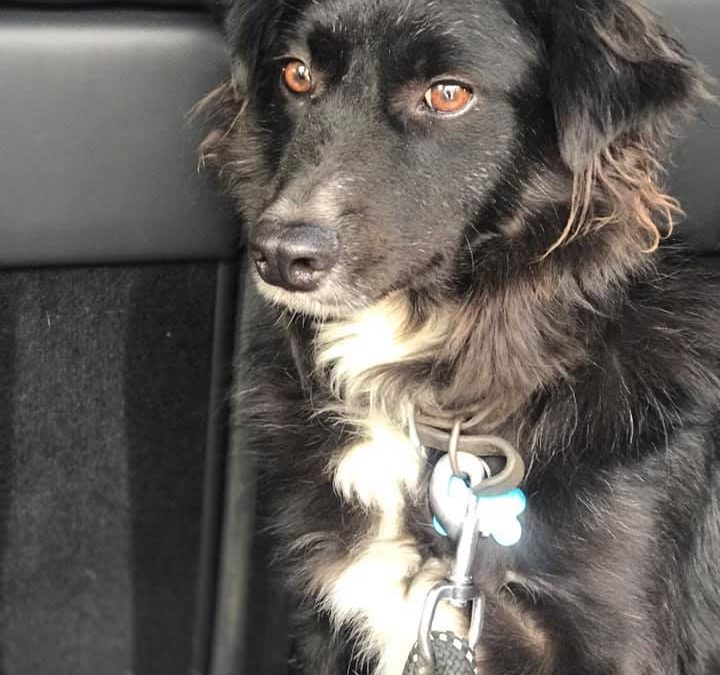 Stolen Dog Found in Abandoned Truck